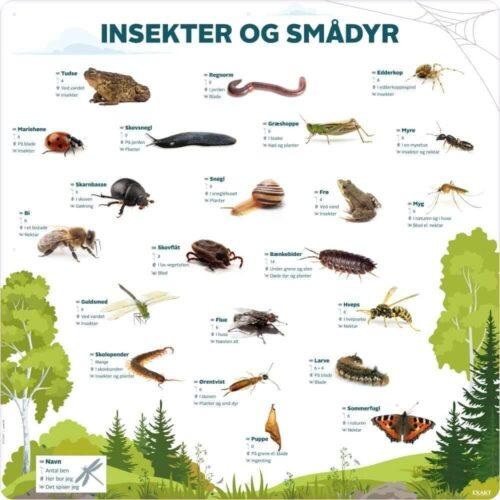 Insekter og smådyr - Læringstavle-0