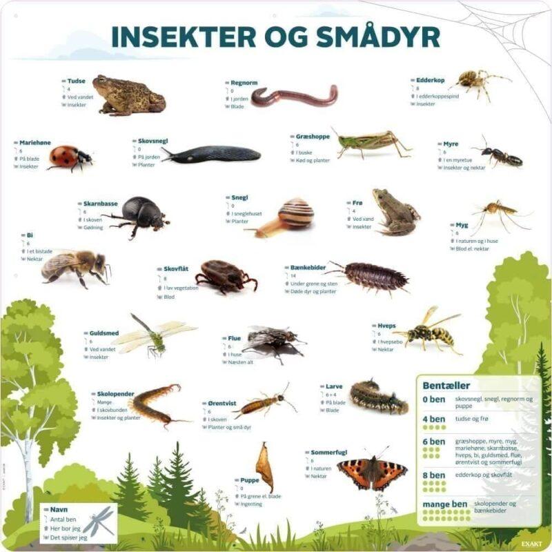 Insekter og Smådyr med bentæller - Læringstavle-0