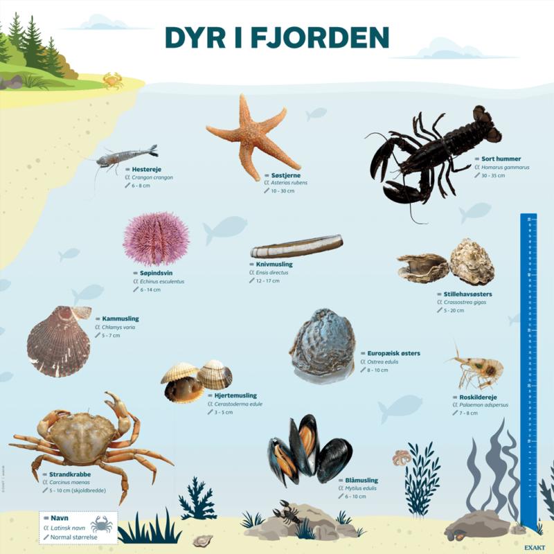 Dyr i fjorden - Læringstavle-0
