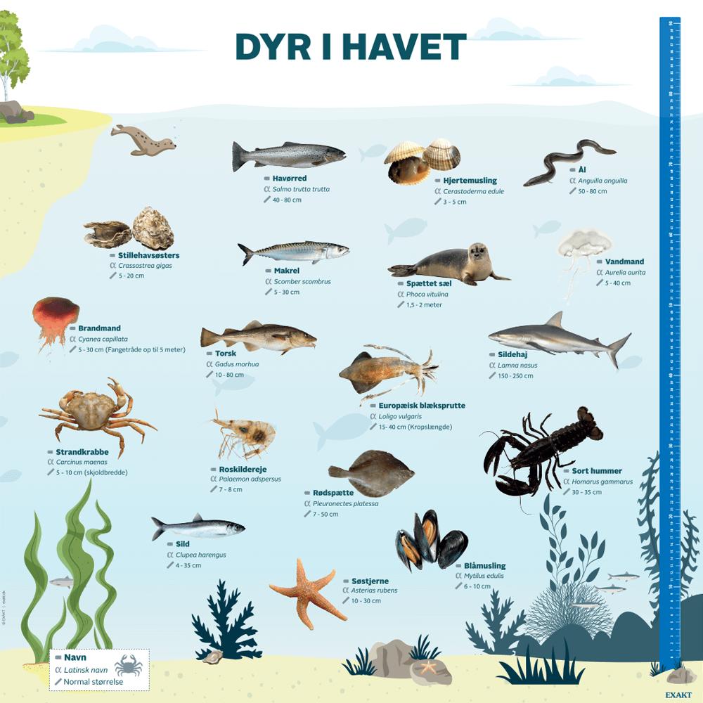 Dyr i havet - Læringstavle-0