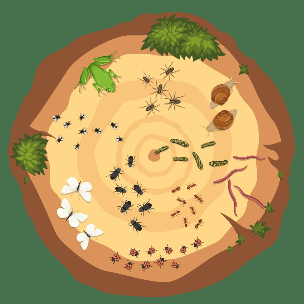 Tælle-træstamme med henholdsvis 1-10 forskellige insekter og smådyr. Bruges i daginstitutionen til at lære børnene at tælle.