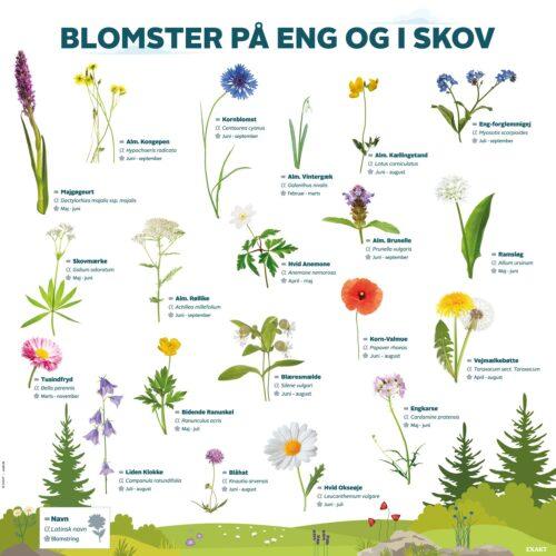 Læringstavle med blomster man kan finde på eng og i skov. Perfekt læringsværktøj om natur og udeliv til daginstitutionen.