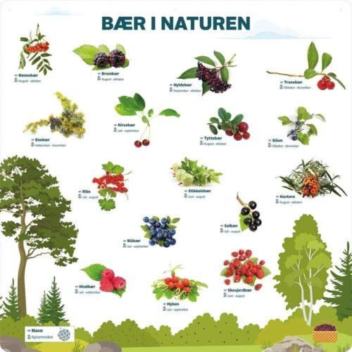 Bær i naturen - Læringstavle-0