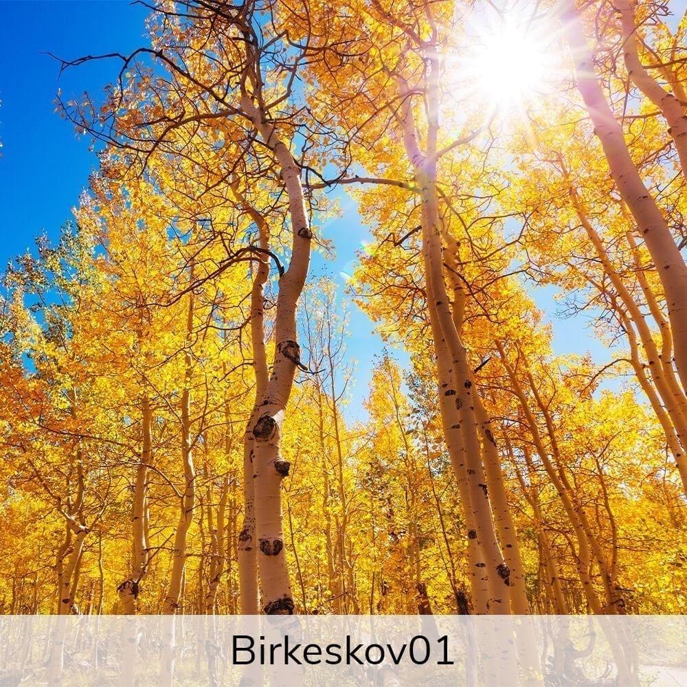 Vægramme - Birkekov-motiver-0