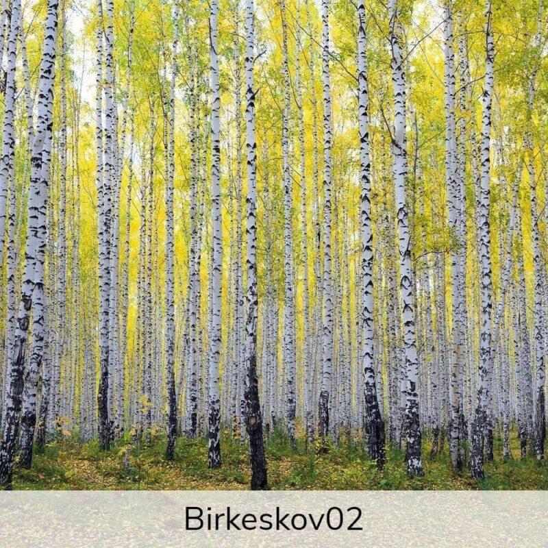 Vægramme - Birkekov-motiver-27376