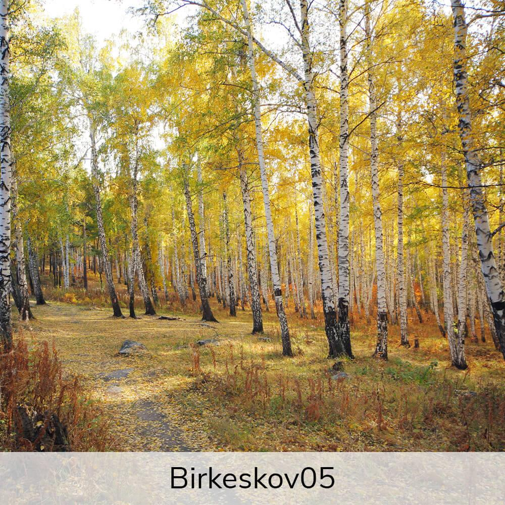 Vægramme - Birkekov-motiver-27379