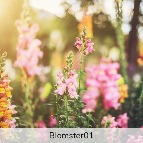 Vægramme - Blomster-motiver-0