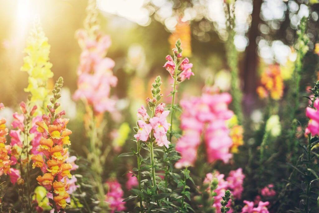 blomster01 m 1