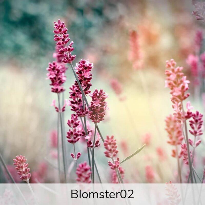Vægramme - Blomster-motiver-27386