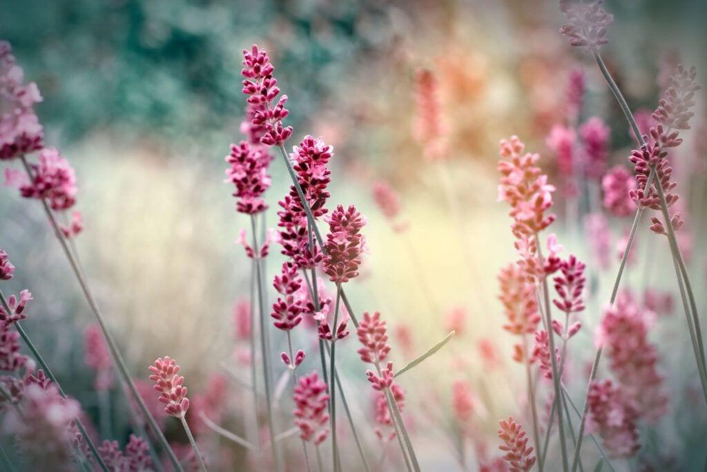 blomster02 m 2