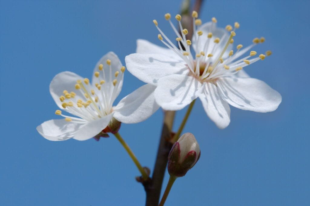 blomster04 m