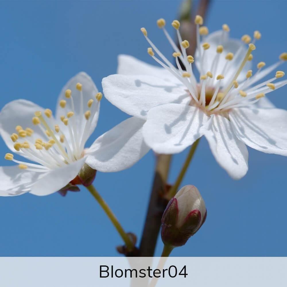 Vægramme - Blomster-motiver-27388