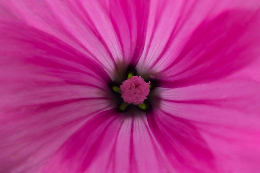 blomster05 m