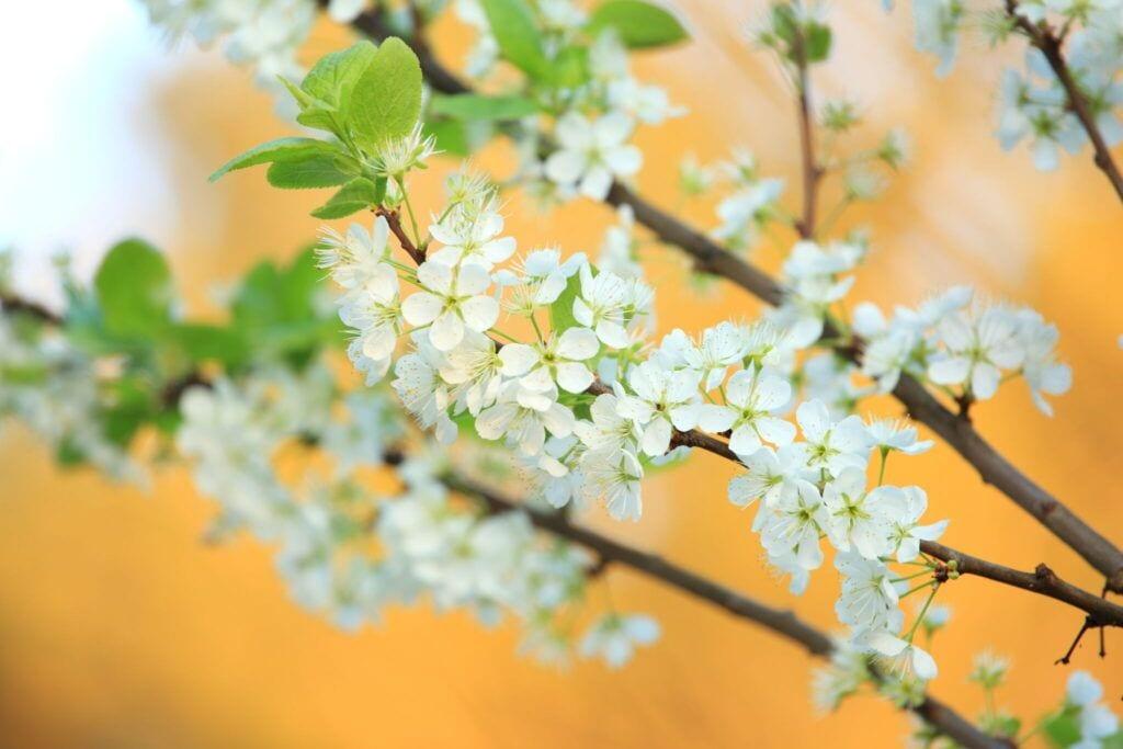 blomster06 m