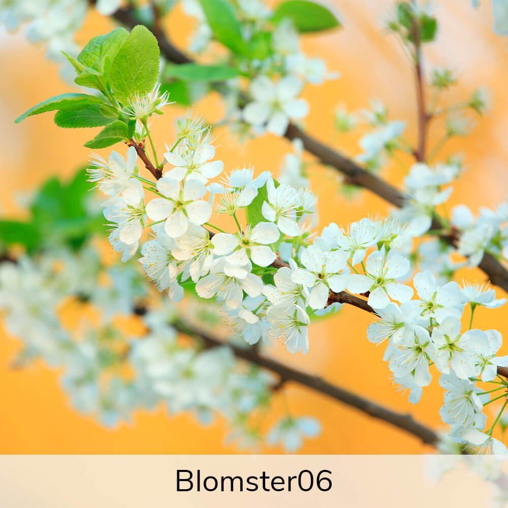 Vægramme - Blomster-motiver-27390