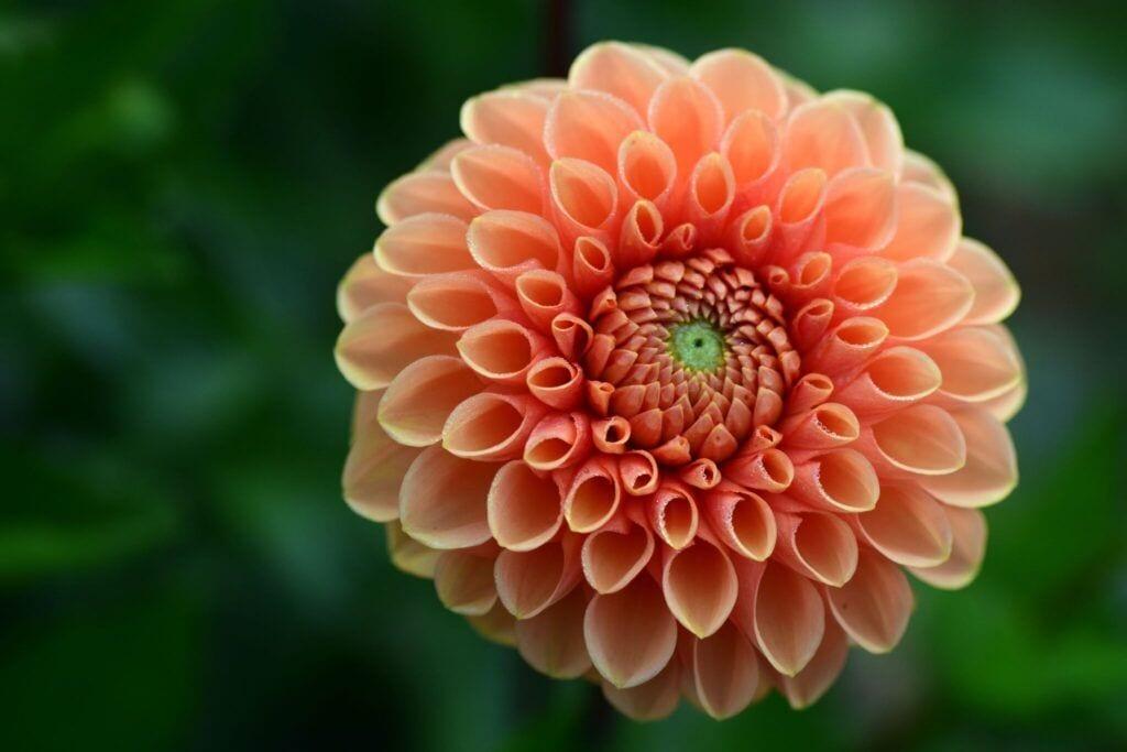 blomster09 m