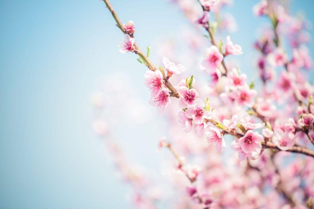 blomster10 m