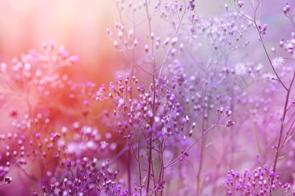blomster11 m 1