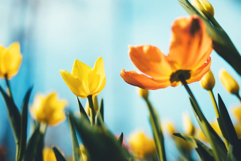 blomster12 m 1