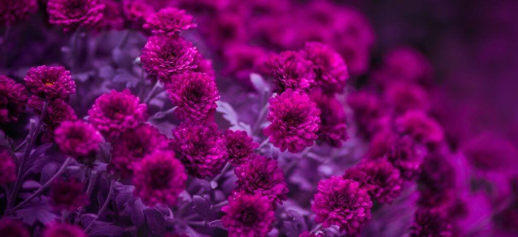 blomster15 m 3