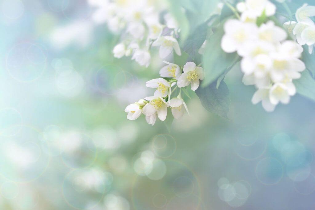 blomster16 m