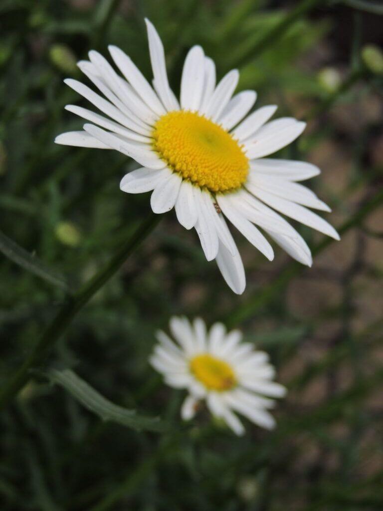 blomster17 m