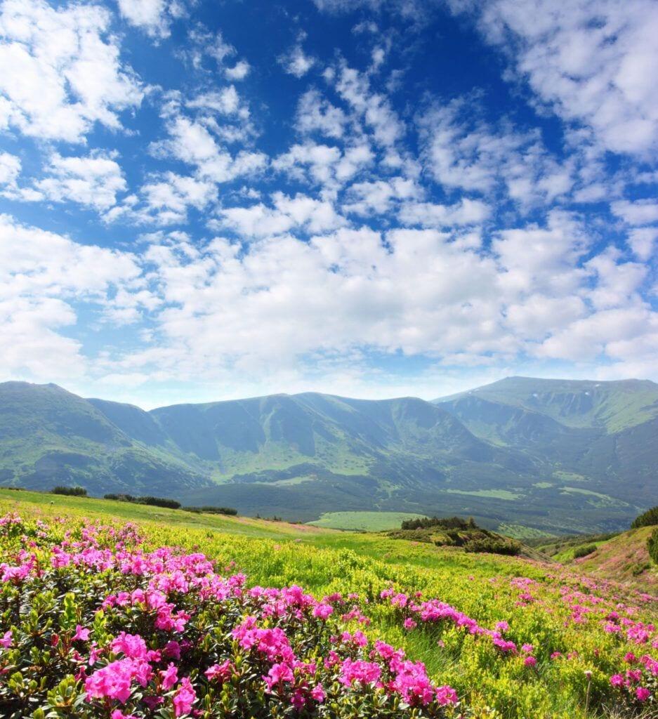 blomstereng01 m