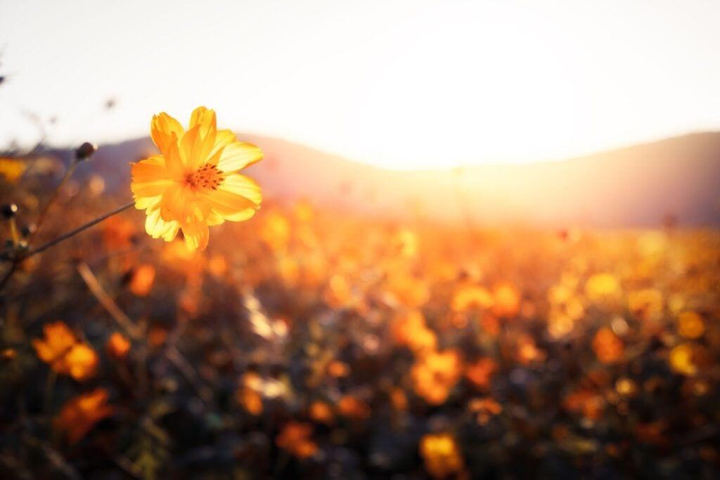 blomstereng04 m