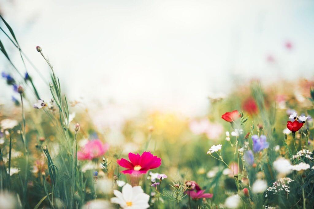 blomstereng06 m