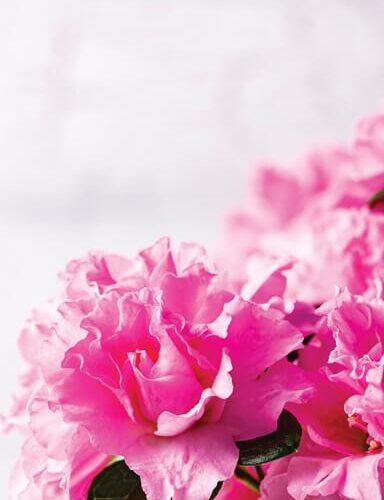 Dørfolie - Blomster-0