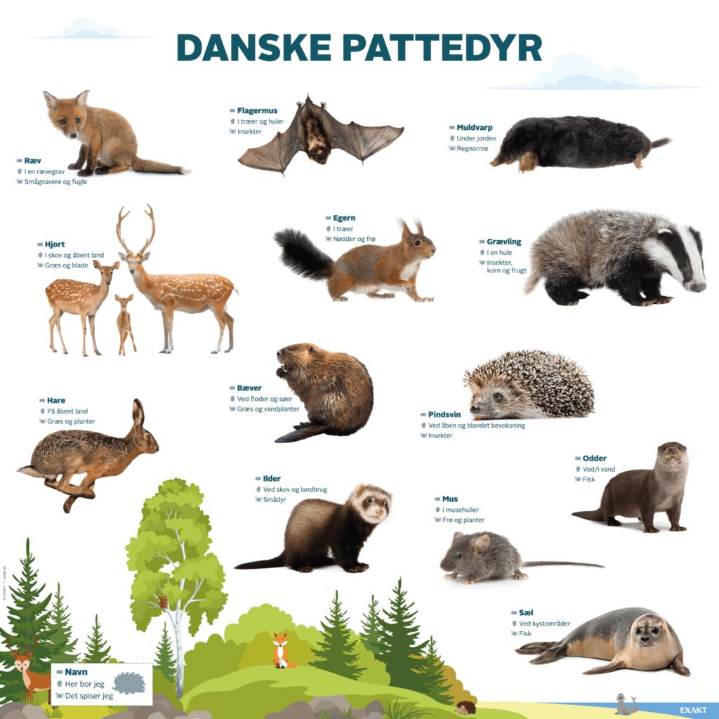 danske pattedyr 1000x1000 d