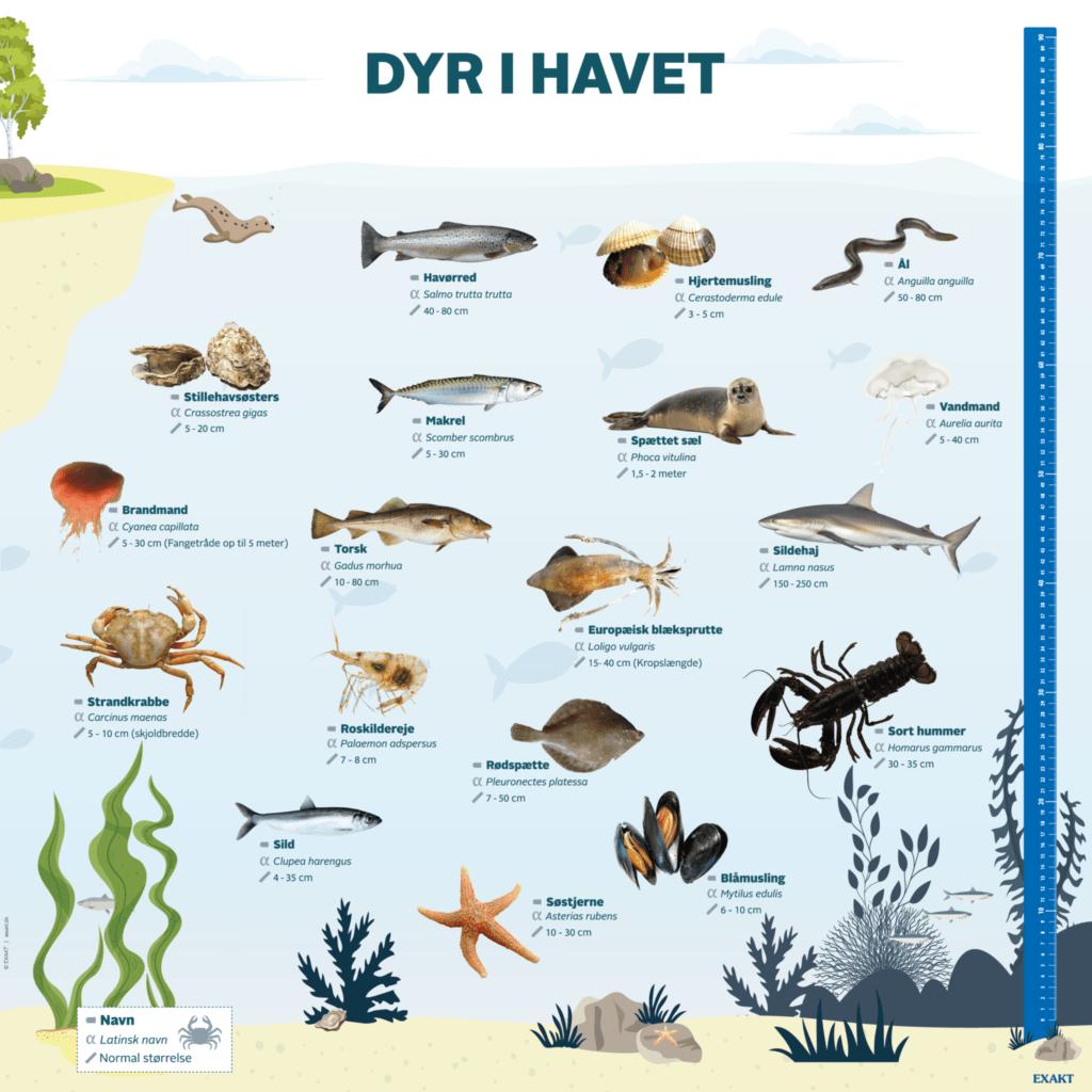 dyr i havet 1000x1000 d