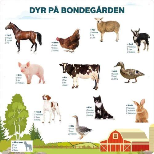 Dyr på bondegården - Læringstavle-0