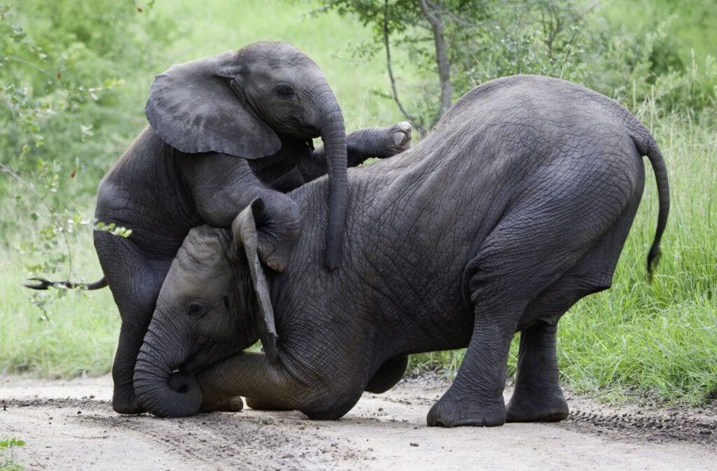 elefant01 m