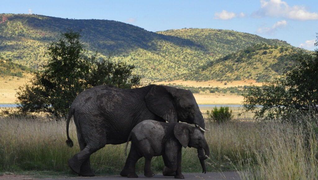 elefant02 m