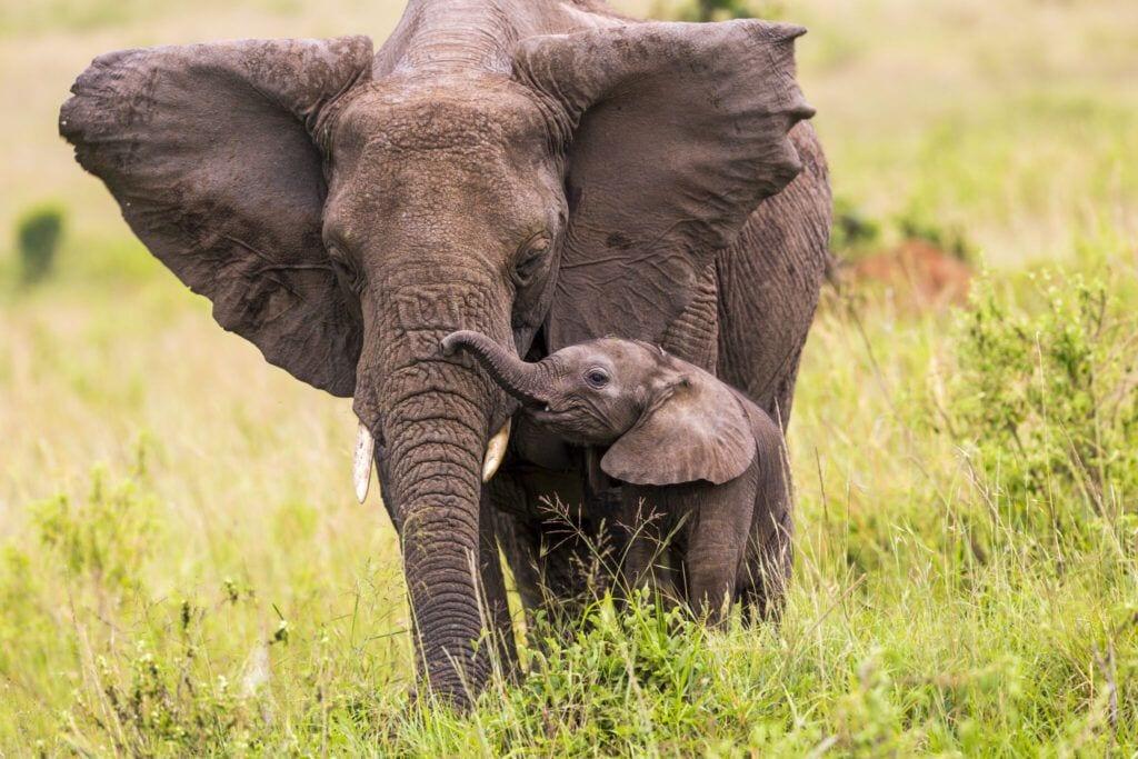 elefant03 m