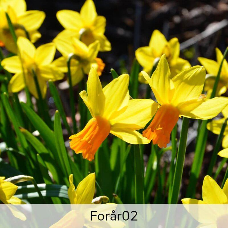 Vægramme - Forårs-motiver-27419