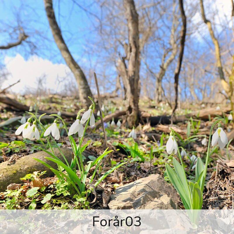 Vægramme - Forårs-motiver-27421
