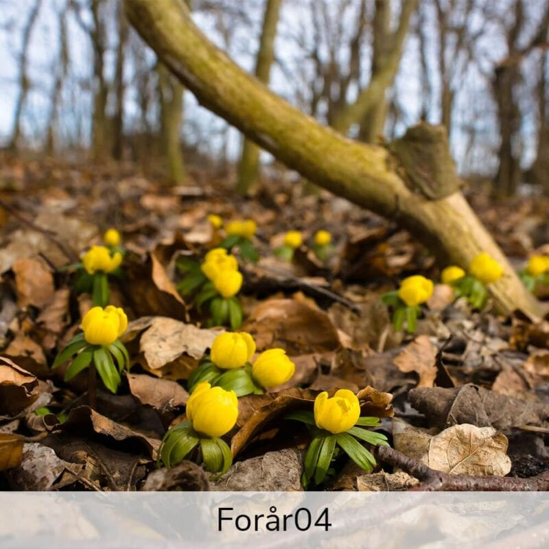 Vægramme - Forårs-motiver-27422