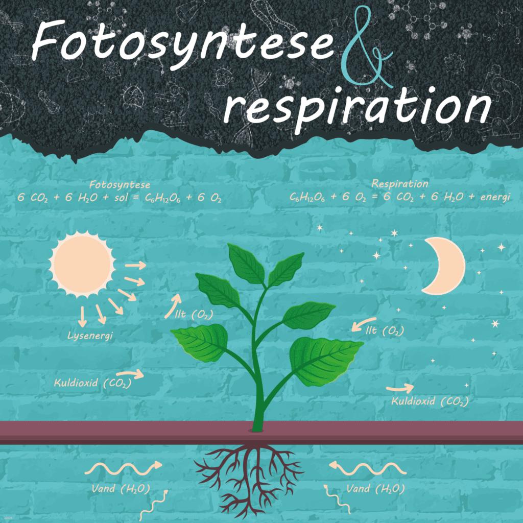 fotosyntese 1000x1000 g