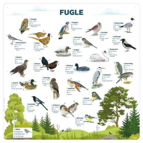Fugle - Læringstavle-0