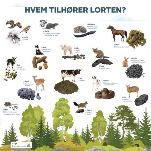 Læringstavle der matcher dyr med deres lort. Sjovt og lærerigt emne for børn i daginstitution, der lærer om natur og science.