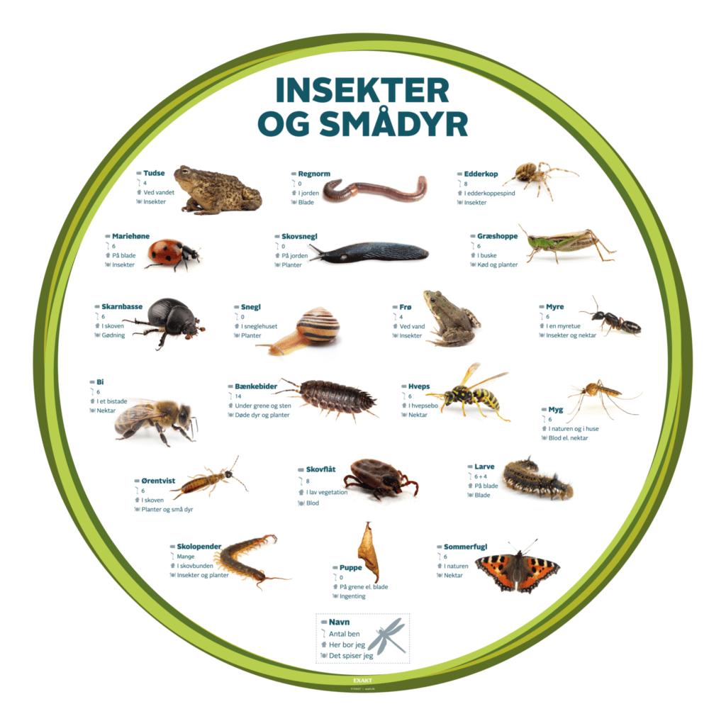insekter og smaadyr 1000 d
