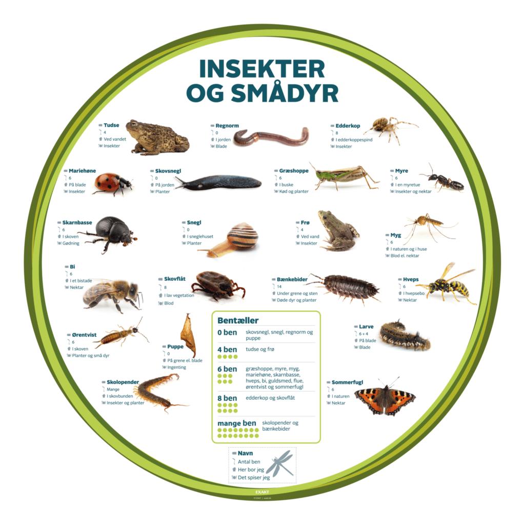 insekter og smaadyr bentaeller 1000 d