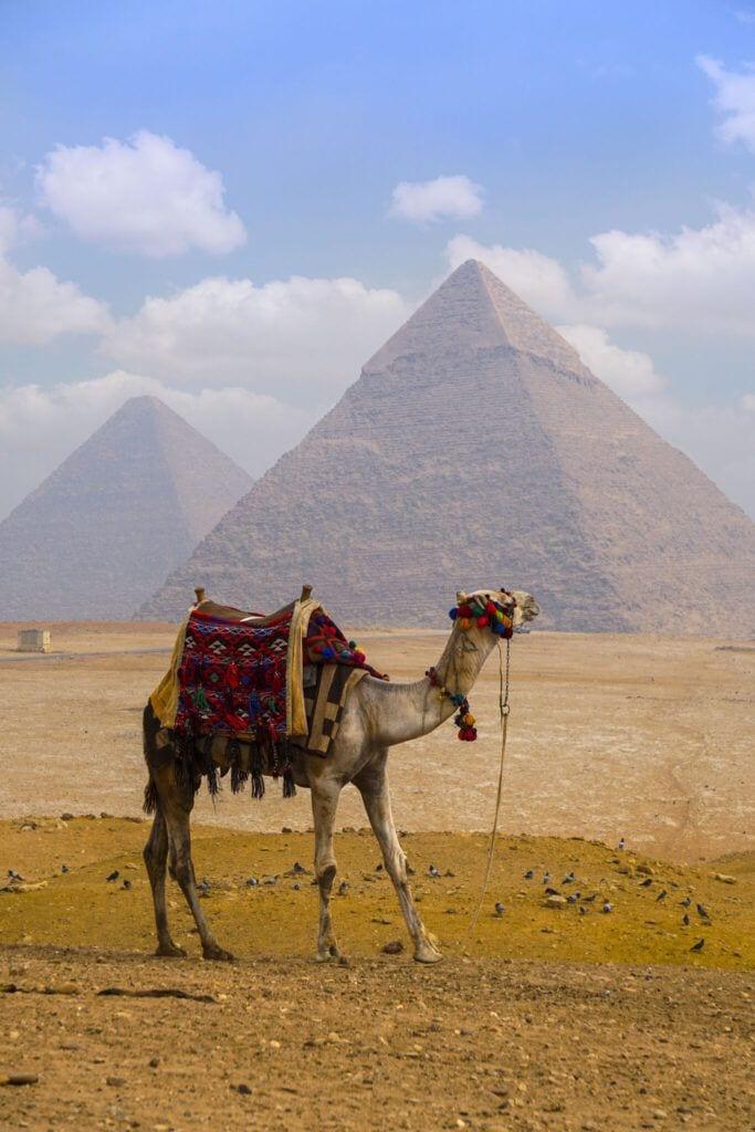 kamel02 m