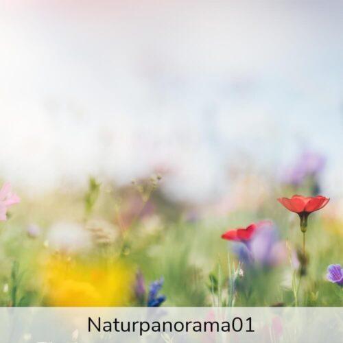 naturpanorama01