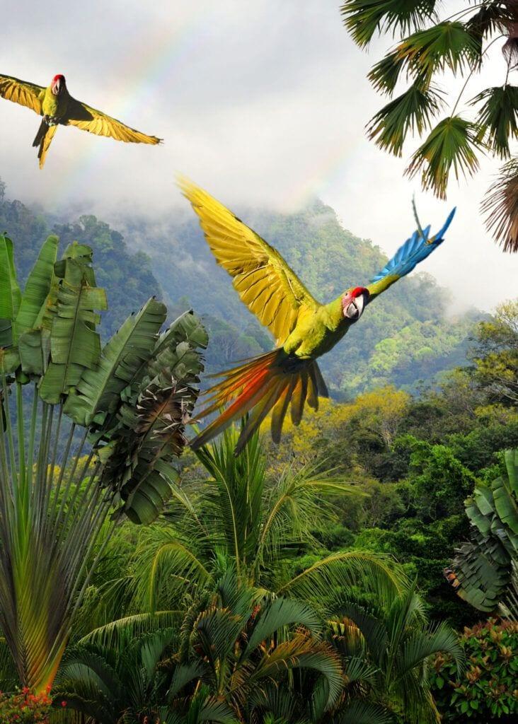 papegoeje02 m