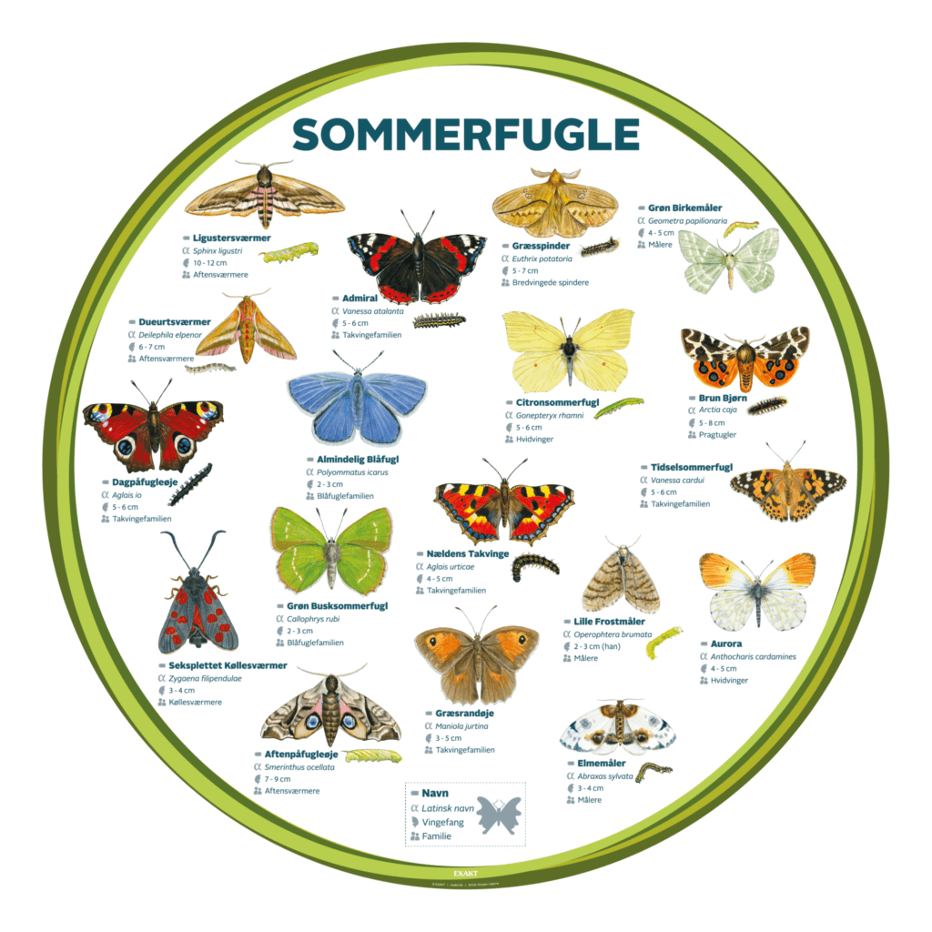 sommerfugle 1000 d