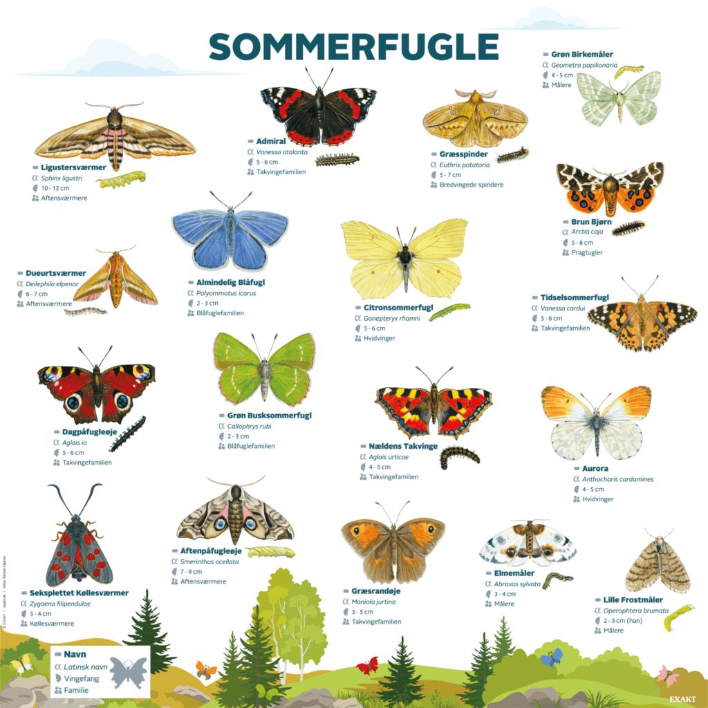 sommerfugle 1000x1000 d
