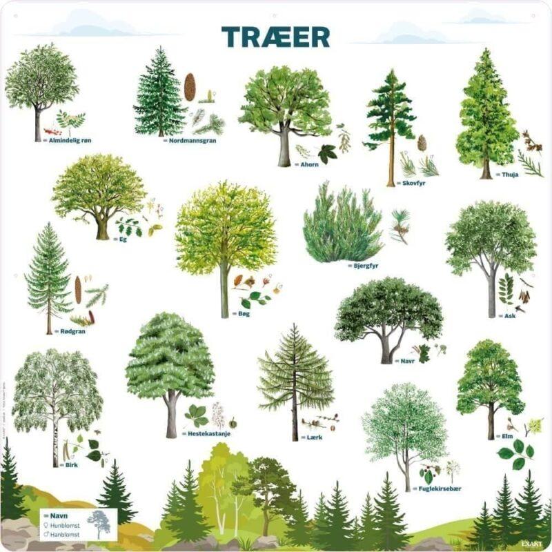 Træer - Læringstavle-0